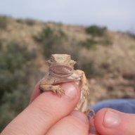 westtexfrog