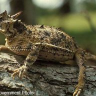 east side frog